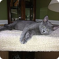 Adopt A Pet :: Stewart - Port Republic, MD