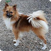 Adopt A Pet :: King - Virginia Beach, VA