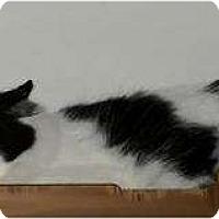 Adopt A Pet :: Becca - Saskatoon, SK