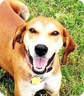 Hound (Unknown Type) Mix Dog for adoption in Houston, Texas - Lucinda