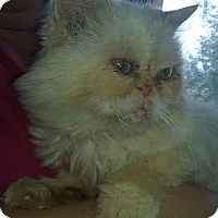 Adopt A Pet :: MoMo - Delmont, PA