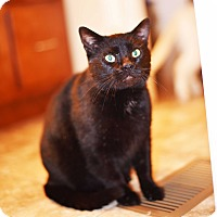 Adopt A Pet :: Mikey - Xenia, OH