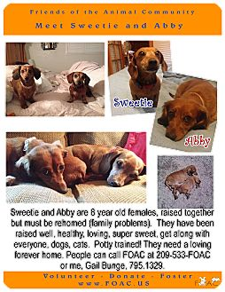 Dachshund Dog for adoption in Sonora, California - Abbey and Sweetie