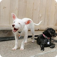 Adopt A Pet :: Benny Boo - Eugene, OR