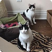 Adopt A Pet :: Carlie and Sadie - Los Angeles, CA