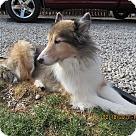 Adopt A Pet :: Pippin (Adoption Pending)