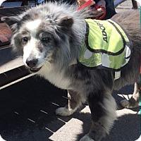 Adopt A Pet :: Spry - Ogden, UT