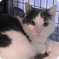 Adopt A Pet :: Madison - Winchendon, MA