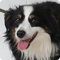 Adopt A Pet :: Loki - Harrisonburg, VA