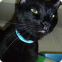 Adopt A Pet :: Auggie - Hamburg, NY