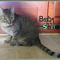 Adopt A Pet :: Baby Shiloh - Culpeper, VA