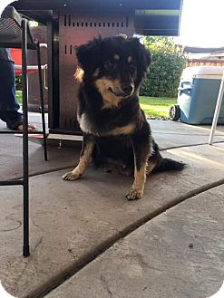 Cattle Dog Mix Dog for adoption in Bakersfield, California - Bloosom