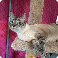 Adopt A Pet :: Alyx - Sylvan Lake, MI