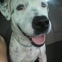Adopt A Pet :: Squid - Maquoketa, IA