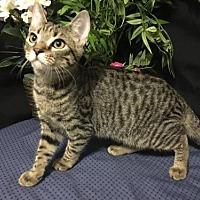 Adopt A Pet :: Sandy - Fayetteville, GA