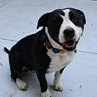 Adopt A Pet :: Julianna - Dublin, CA