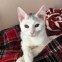 Adopt A Pet :: Myles - Columbus, OH