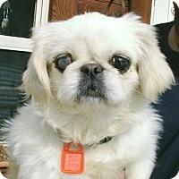 Adopt A Pet :: Priscilla - cedar grove, IN