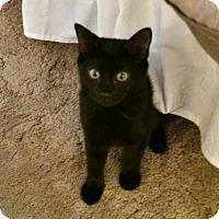 Adopt A Pet :: Dar - Colmar, PA
