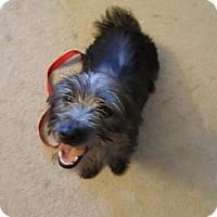 Adopt A Pet :: Kissy - West Warwick, RI