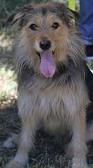 Terrier (Unknown Type, Medium)/Collie Mix Dog for adoption in Wayne, New Jersey - Rex