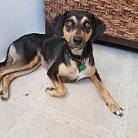Adopt A Pet :: LuAnn - St John, VI