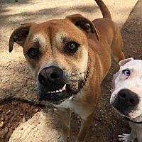 Adopt A Pet :: Paco - Gilmer, TX
