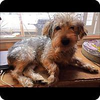 Adopt A Pet :: Jackson - Hazard, KY