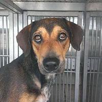 Adopt A Pet :: Kooper KP - Schertz, TX