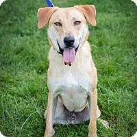 Adopt A Pet :: Hilton - Christiana, TN