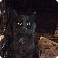 Adopt A Pet :: Tie Domi - Toronto, ON