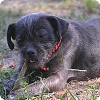 Terrier (Unknown Type, Small) Mix Dog for adoption in Southbury, Connecticut - Eliza Jane ~ meet me!