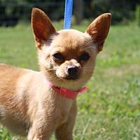 Adopt A Pet :: Magik - Poughkeepsie, NY