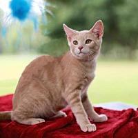 Adopt A Pet :: MIGHTY MORRIS - Brattleboro, VT