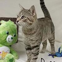 Adopt A Pet :: Dane - Kendallville, IN