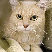 Adopt A Pet :: Zippie - Germantown, OH