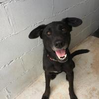 Adopt A Pet :: Boomer - Kirby, TX