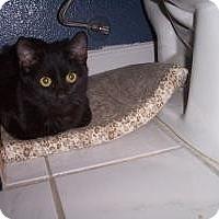 Adopt A Pet :: Coal - Tempe, AZ