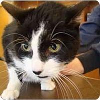 Adopt A Pet :: Nibby - Muncie, IN