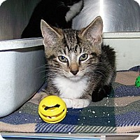 Adopt A Pet :: Gorty - Dover, OH