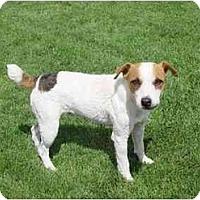 Adopt A Pet :: BELLE STARR - Scottsdale, AZ