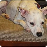 Adopt A Pet :: Zoey - Jacksonville, FL