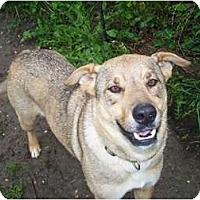 Adopt A Pet :: Sadie ADOPTION PENDING!! - Antioch, IL