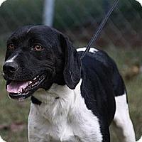 Adopt A Pet :: Mrs Muttley (In New Eng) - Brattleboro, VT