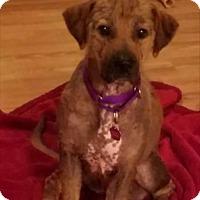 Adopt A Pet :: Tucker - Fredericksburg, VA