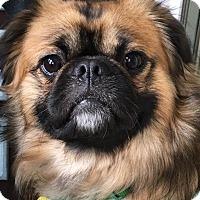 Adopt A Pet :: Frankie - Portland, ME
