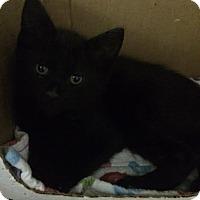 Adopt A Pet :: Isaac - Byron Center, MI