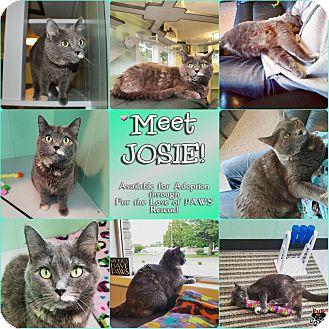 Calico Cat for adoption in North Platte, Nebraska - Josie