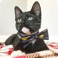 Adopt A Pet :: Blaze - Duluth, GA