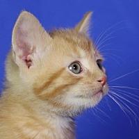 Adopt A Pet :: Thoreau - Winston-Salem, NC